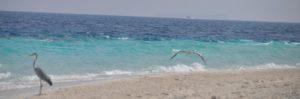 Песчанный пляж