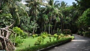 Природа на островах